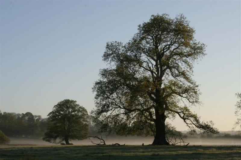 early-may-morning-richard-argyle-large