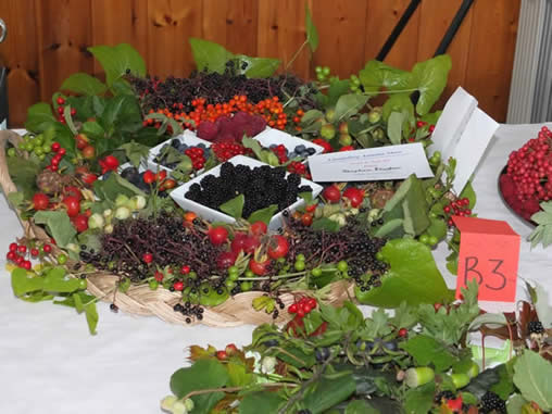 autumn-show-2013-berries