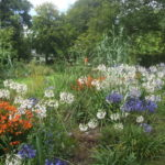 Llwyngarreg Gardens Llanfallteg